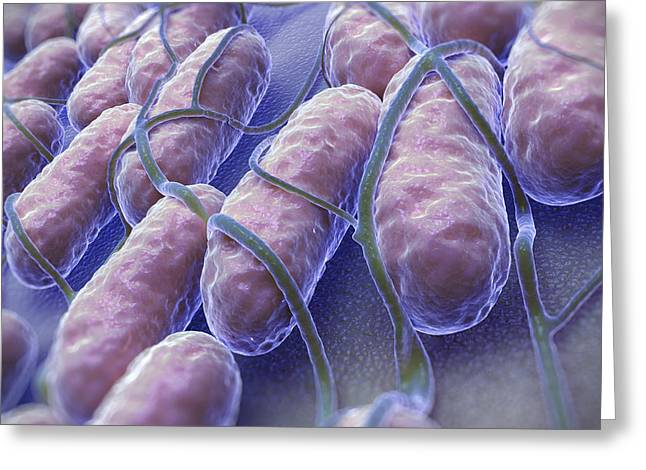Gram-negative Greeting Cards - Salmonella Bacteria Greeting Card by Science Picture Co