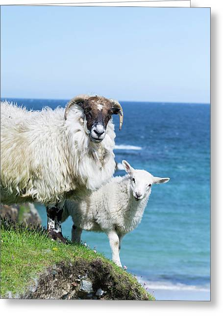 Scottish Blackface On The Isle Greeting Card by Martin Zwick