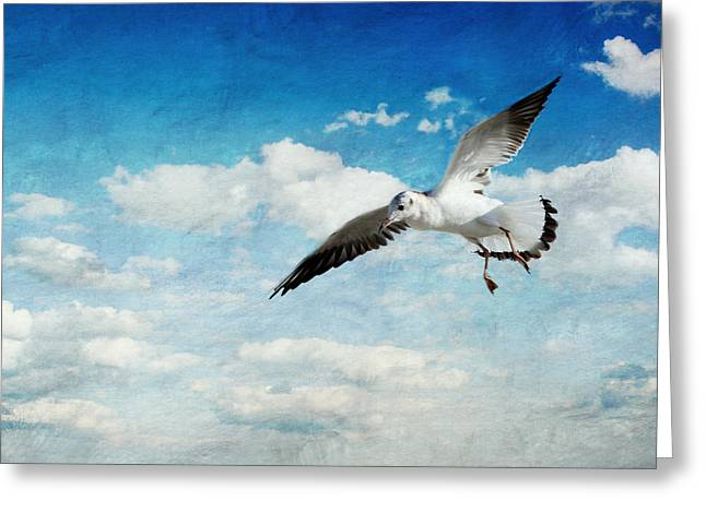 Spring Scenes Mixed Media Greeting Cards - Seagull Greeting Card by Heike Hultsch
