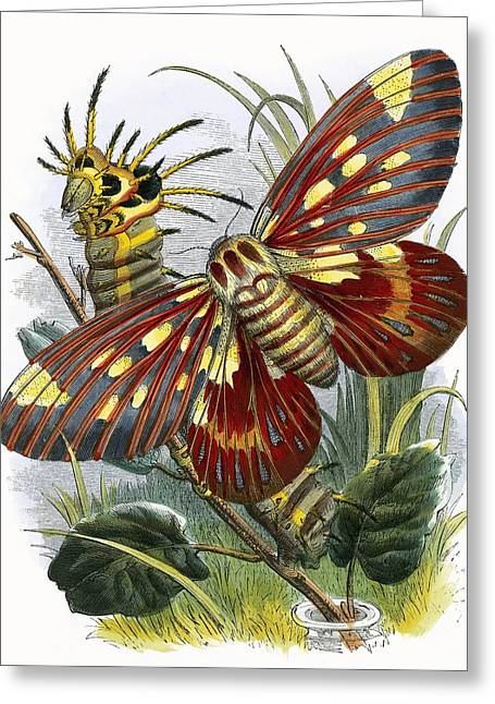 Pupa Greeting Cards - The Butterfly Vivarium Greeting Card by English School