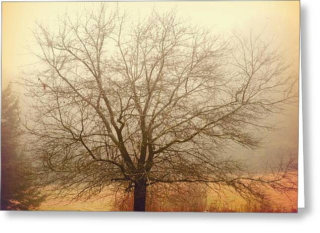 Fall Grass Greeting Cards - Tree Greeting Card by HD Connelly