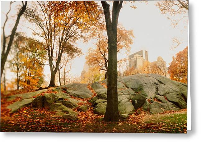 Fallen Leaf Greeting Cards - Trees In A Park, Central Park Greeting Card by Panoramic Images