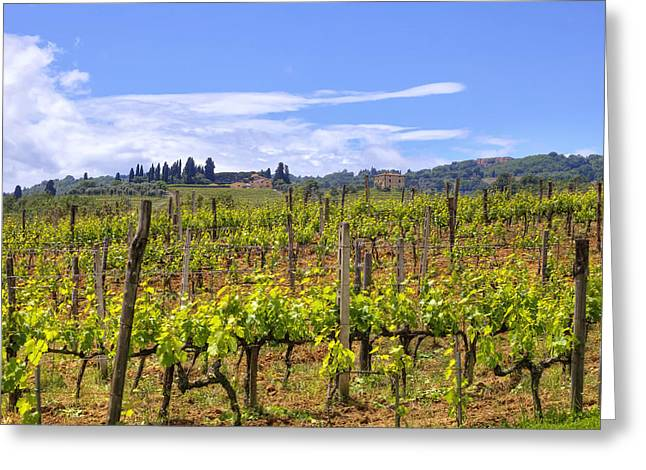 Italian Wine Greeting Cards - Tuscany - Montalcino Greeting Card by Joana Kruse