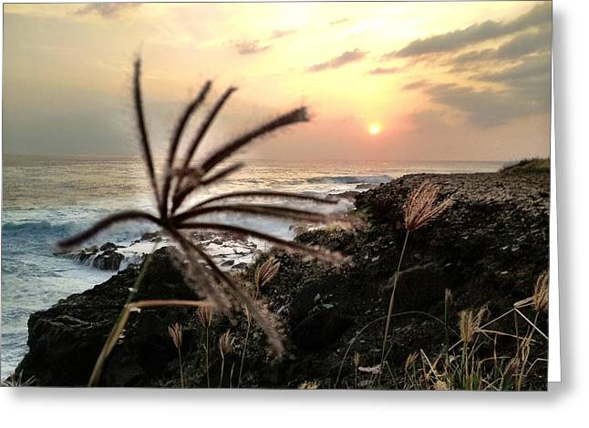 Beach Scenery Greeting Cards - Untitled Greeting Card by Daniele Smith