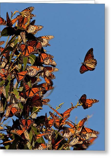 Usa, California, San Luis Obispo County Greeting Card by Jaynes Gallery