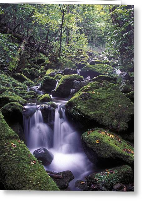 Far Greeting Cards - Ussuri Territory Greeting Card by Anonymous