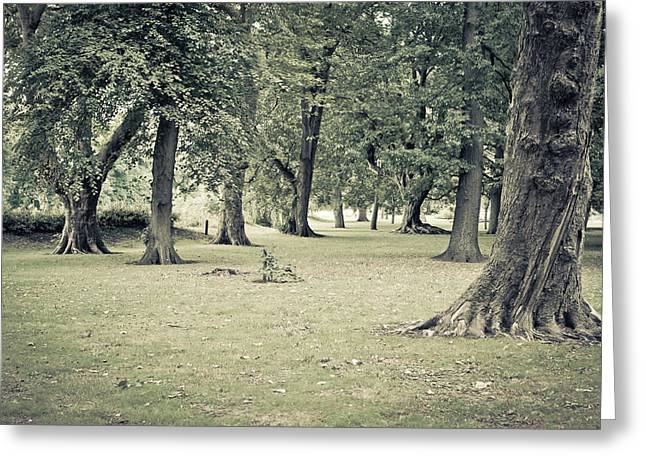 Reserve Greeting Cards - Woodland Greeting Card by Tom Gowanlock