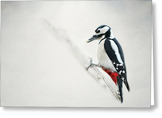 Winter Photos Mixed Media Greeting Cards - Woodpecker Greeting Card by Heike Hultsch