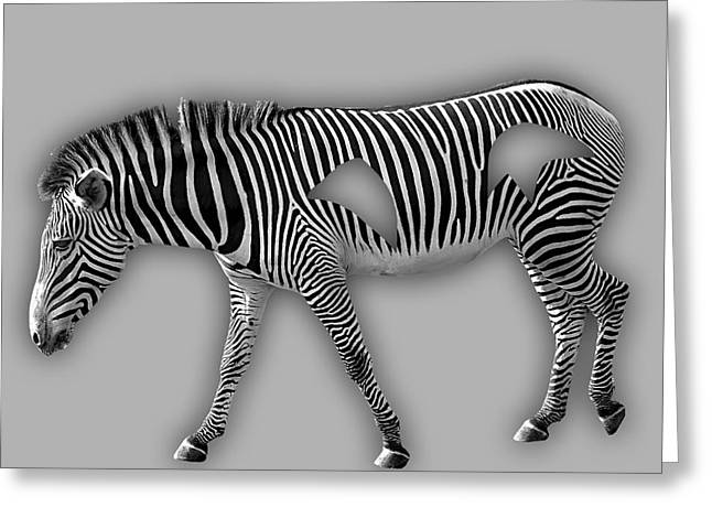 Zebra Greeting Cards - Zebra Collection Greeting Card by Marvin Blaine