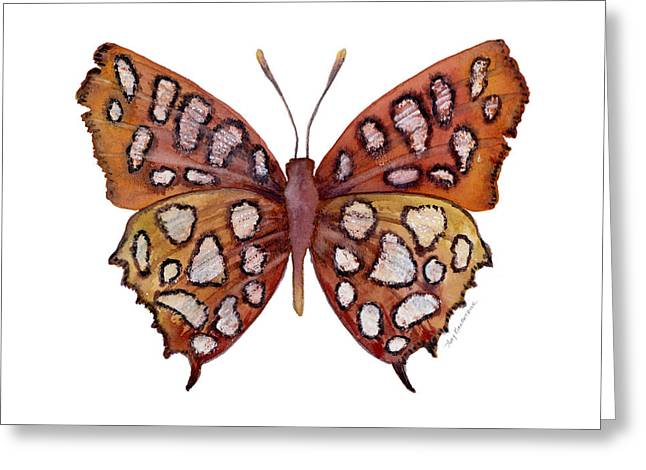 Background Paintings Greeting Cards - 61 Hutchinsons Highflier Butterfly Greeting Card by Amy Kirkpatrick