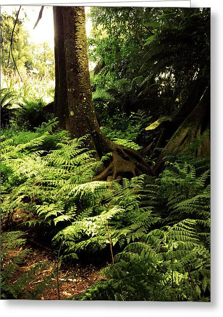 Forest Photographs Greeting Cards - Jungle Greeting Card by Les Cunliffe