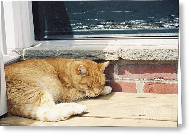 Catnap Greeting Cards - #665 03 Catnap  Greeting Card by Robin Lee Mccarthy Photography