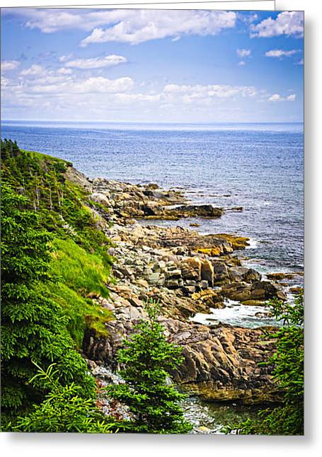 Ocean Shore Greeting Cards - Atlantic coast in Newfoundland Greeting Card by Elena Elisseeva
