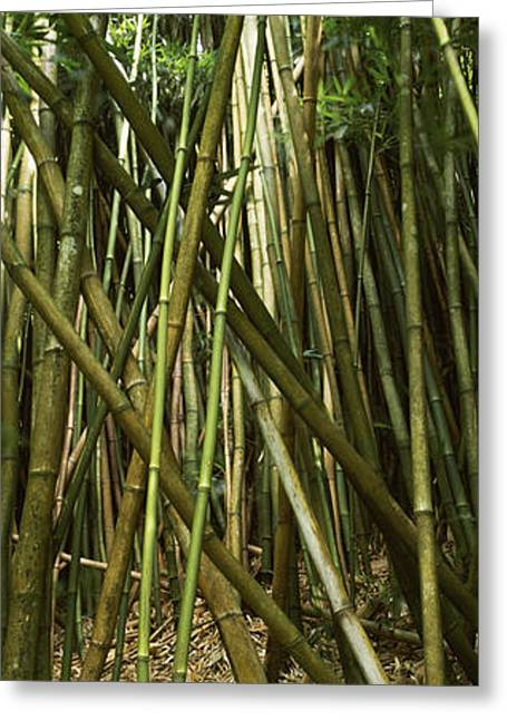 ; Maui Greeting Cards - Bamboo Forest, Oheo Gulch, Seven Sacred Greeting Card by Panoramic Images