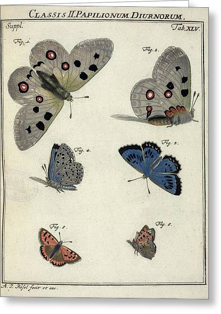 Sel Greeting Cards - Butterflies, 18th century artwork Greeting Card by Science Photo Library