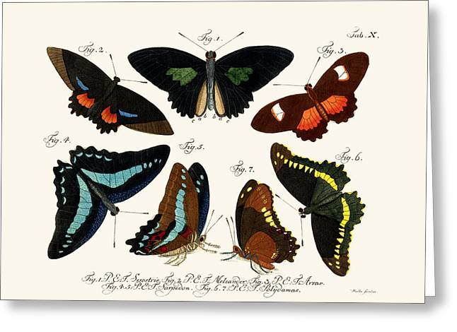 Patch Drawings Greeting Cards - Butterflies Greeting Card by Splendid Art Prints