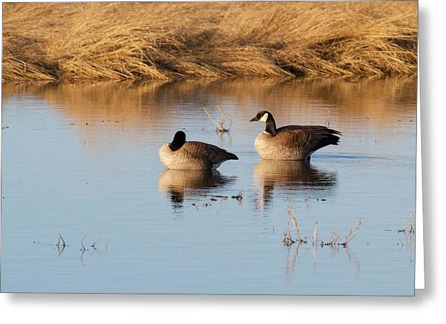 Alaska Greeting Cards - Canada Geese Greeting Card by Dee Carpenter