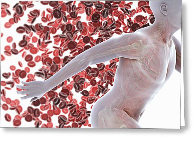 Physical Body Greeting Cards - Cardiovascular Activity Greeting Card by Science Picture Co