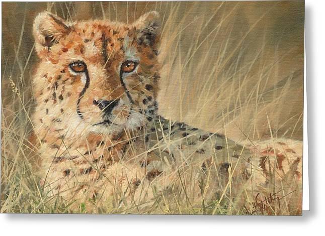 Cheetahs Greeting Cards - Cheetah Greeting Card by David Stribbling