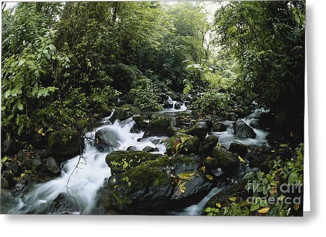 Rush-bed Greeting Cards - Cloud Forest, Costa Rica Greeting Card by Gregory G. Dimijian, M.D.