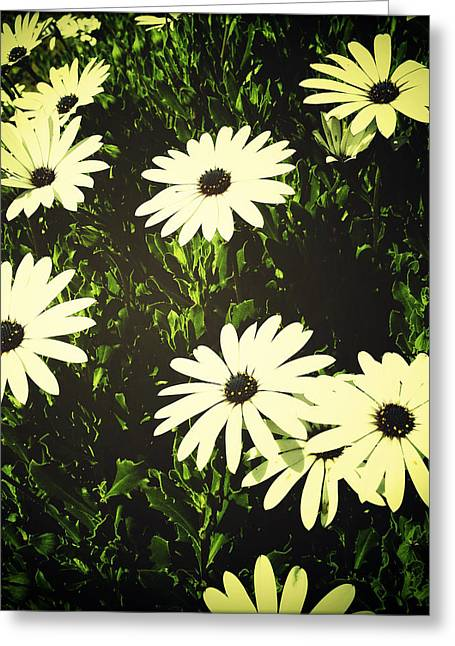 Delicate Bloom Greeting Cards - Daisies Greeting Card by Les Cunliffe