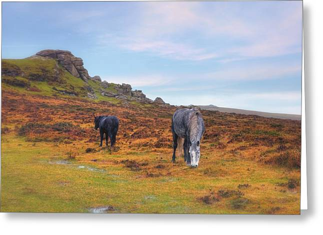 Moorlands Greeting Cards - Dartmoor Greeting Card by Joana Kruse