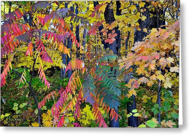 Fall Colors Greeting Cards - Devils Lake Fall Color Greeting Card by Ray Mathis