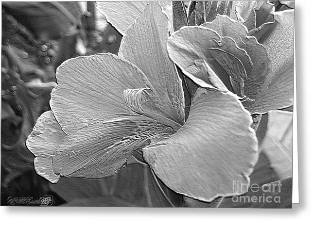 Canna Digital Art Greeting Cards - Dwarf Canna Lily named Corsica Greeting Card by J McCombie