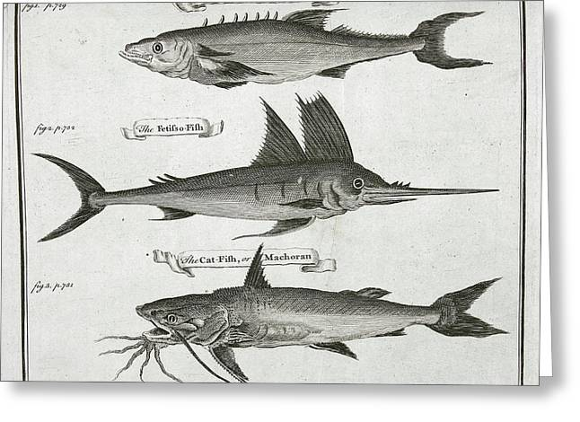 Fish Greeting Card by British Library