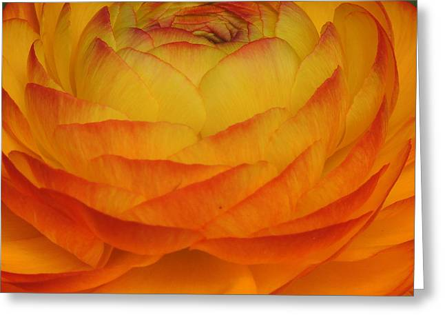 Keith Rautio Greeting Cards - Flower Series Greeting Card by Keith Rautio