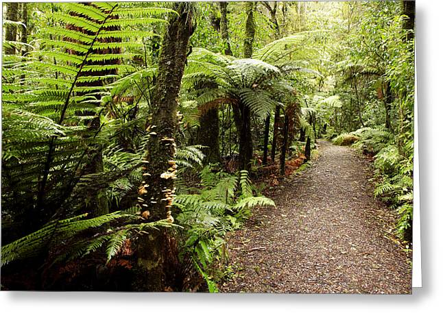 Discovery Greeting Cards - Forest Greeting Card by Les Cunliffe