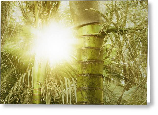 Tropical Photographs Greeting Cards - Forest light Greeting Card by Les Cunliffe