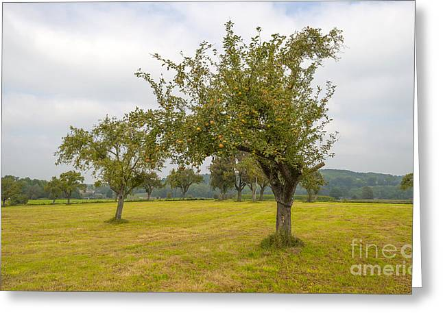 Limburg Greeting Cards - Fruit trees in a meadow in summer Greeting Card by Jan Marijs