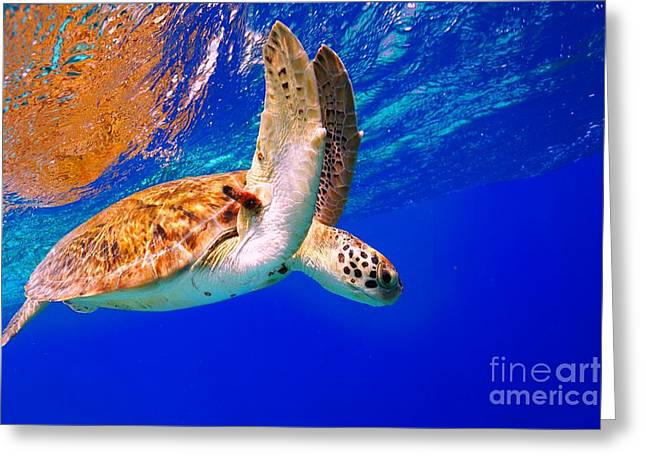 Green Sea Turtle Greeting Card by Isabelle Kuehn