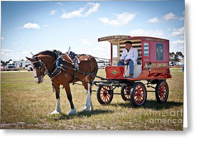 Horse And Cart Greeting Cards - Horse and Carriage Greeting Card by Alexander Whadcoat
