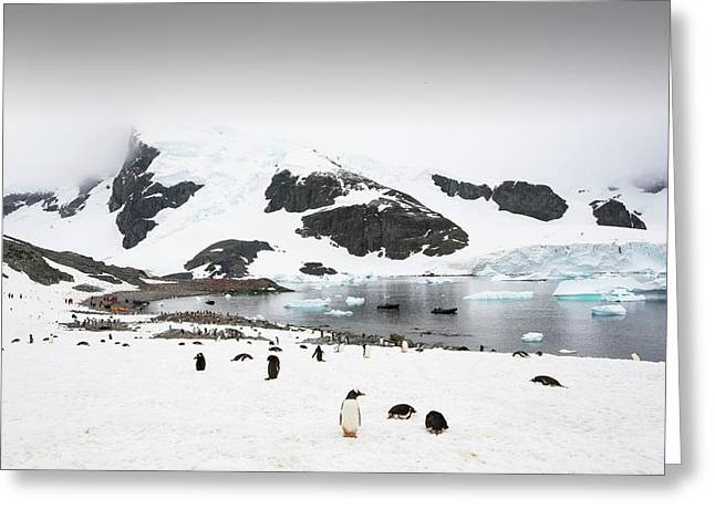 Icebergs Off Curverville Island Greeting Card by Ashley Cooper