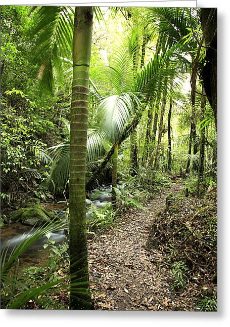 Green Day Greeting Cards - Jungle  Greeting Card by Les Cunliffe