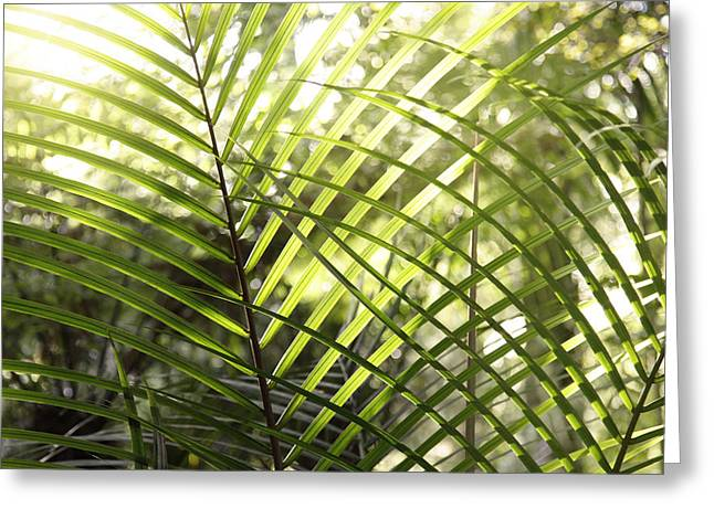 Tropical Photographs Greeting Cards - Leaves Greeting Card by Les Cunliffe