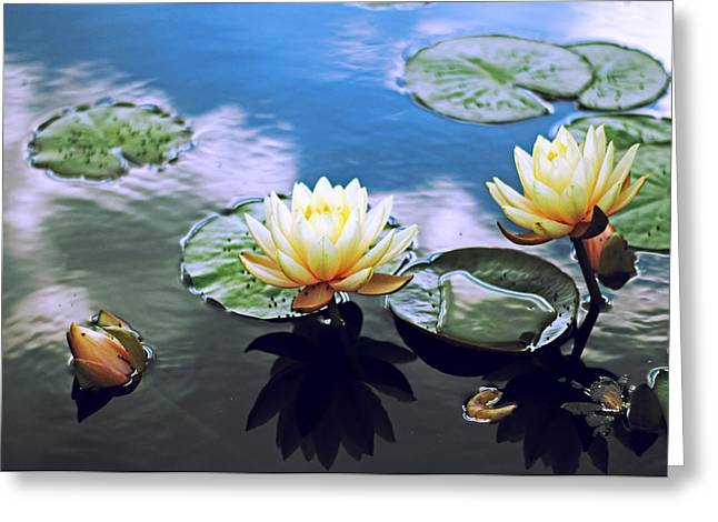 Lily Pads Greeting Cards - Lily Pond Greeting Card by Jessica Jenney