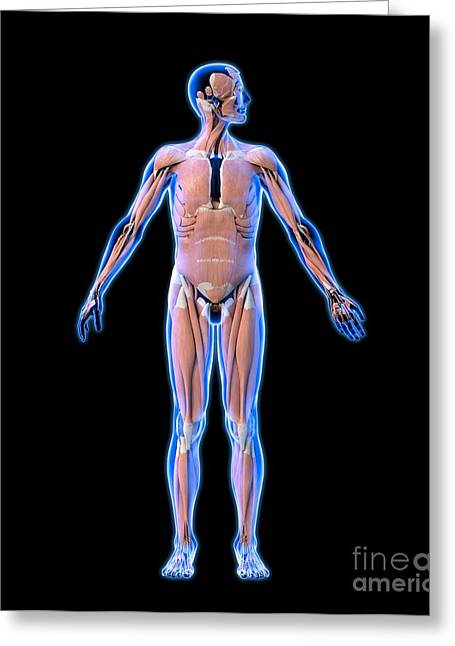 Conscious Greeting Cards - Male Muscles, Artwork Greeting Card by Roger Harris