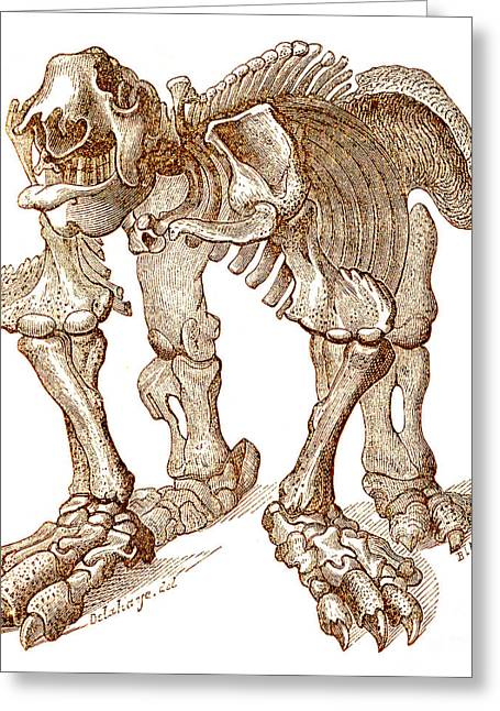 Sloth Greeting Cards - Megatherium, Cenozoic Mammal Greeting Card by Science Source