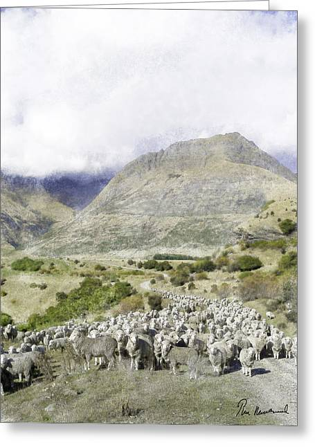 Daylight Pastels Greeting Cards - New Zealand Sheep Greeting Card by Tim Mulholland