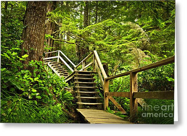 Wooden Stairs Greeting Cards - Path in temperate rainforest Greeting Card by Elena Elisseeva