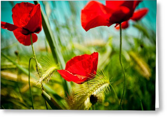 Purple Pyrography Greeting Cards - Poppy field and sky Greeting Card by Raimond Klavins
