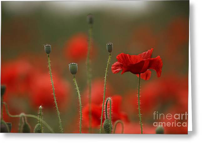 Summertime Greeting Cards - Red Greeting Card by Nailia Schwarz