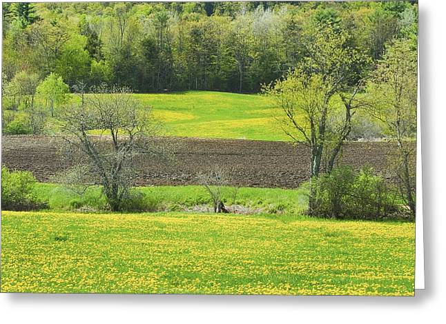 Spring In Maine Photographs Greeting Cards - Spring Farm Landscape With Dandelion bloom in Maine Greeting Card by Keith Webber Jr