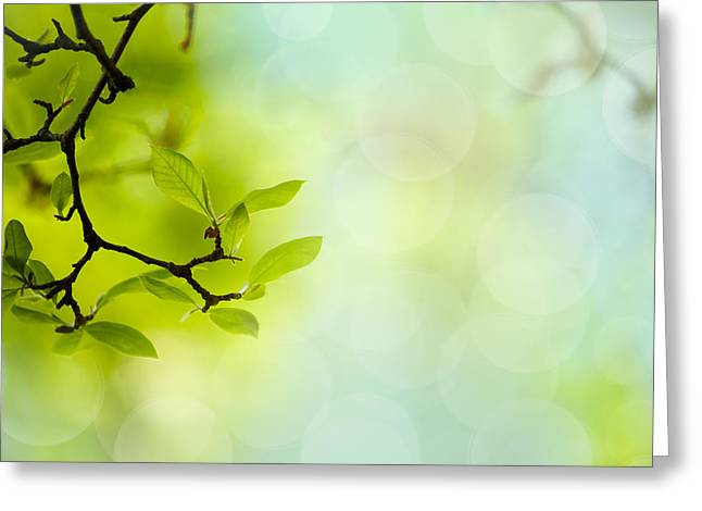 Shallows Greeting Cards - Spring Green Greeting Card by Nailia Schwarz