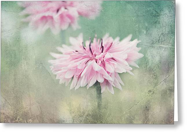 Canvas Framing Greeting Cards - Still life Greeting Card by Heike Hultsch