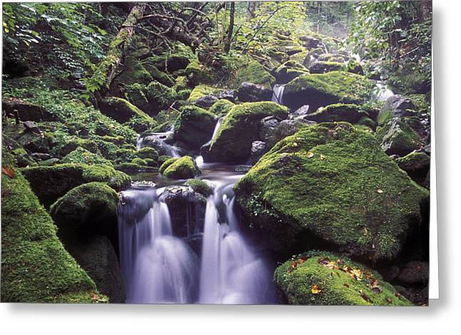 Moss Greeting Cards - Ussuri Territory Greeting Card by Anonymous
