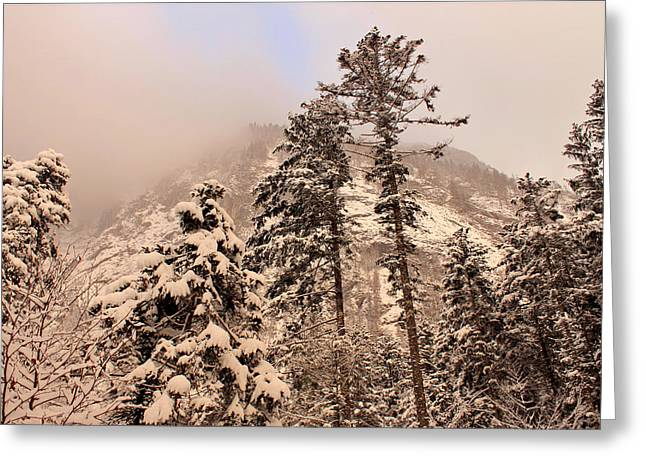 Snow-covered Landscape Greeting Cards - Winter Wonderland Greeting Card by Mountain Dreams
